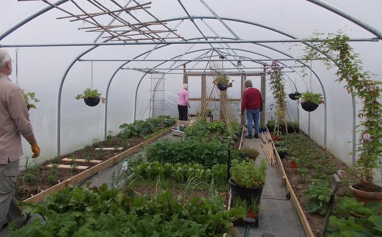 benefits of polytunnel