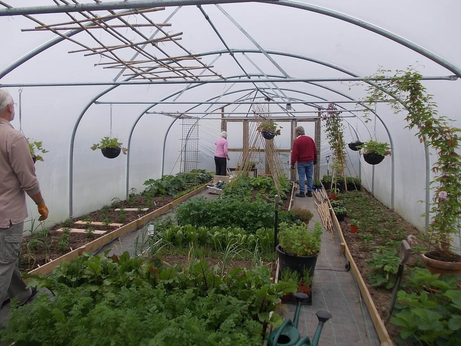 The Benefits of Polytunnel