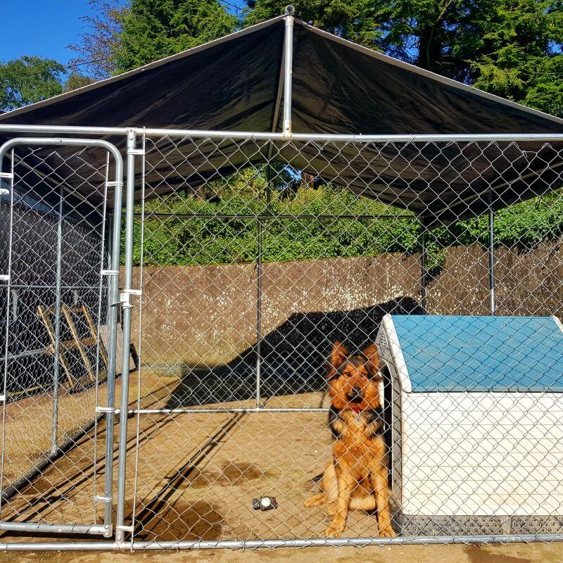 10 x 10FT Walk In Dog Kennel Pen Run Outdoor Exercise Cage Free Roof