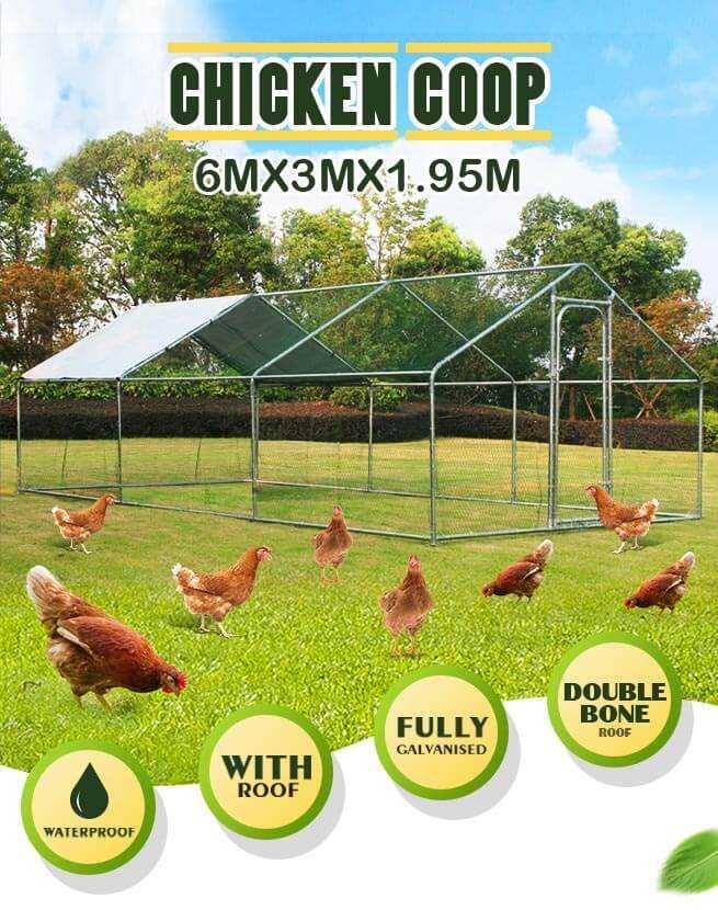 Hen Poultry Runs